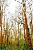 Bois Images libres de droits