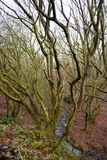 Bois anglais du nord-ouest. Image stock