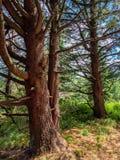 Bois antiques Photo stock