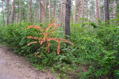 Bois avec des buissons Image stock