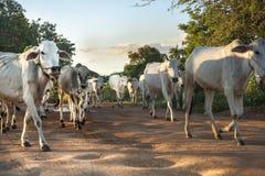 Bois brancos na rua da sujeira. Fotos de Stock