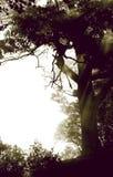 Bois brumeux Photos stock
