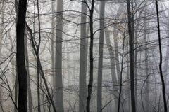 Bois brumeux Image libre de droits