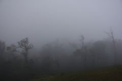 Bois brumeux avec des silhouettes de brouillard épais et d'arbres Images stock