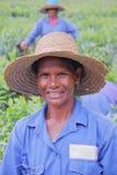 BOIS CHERI, ÎLES MAURICE - 24 NOVEMBRE 2012 : Portrait d'un plumeur de thé en plantations de Bois Cheri Tea photo libre de droits