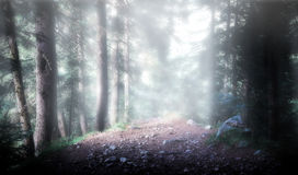 Bois complexe Photographie stock libre de droits