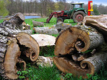 Bois coupe avec tracteur. Interesting logs with a tractor on background Stock Images