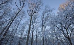Bois couverts de neige dans le soulagement pointu Images libres de droits