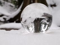 bois cristallisé photos stock