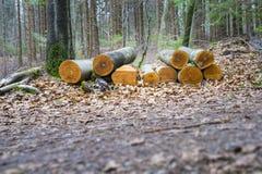bois cutted dans la forêt Photo stock