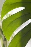 Bois décoratif photo stock
