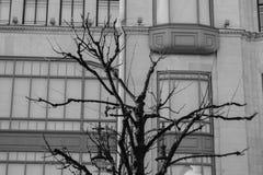 Bois d'ébène sur le fond de bâtiment images libres de droits