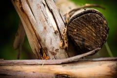 Bois d'écorce Image libre de droits