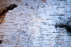 bois d'écorce d'écorce Images libres de droits