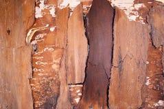 bois d'écorce d'écorce Photos stock