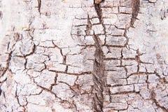 Bois d'écorce de surface de texture, fond d'arbre d'écorce photo stock