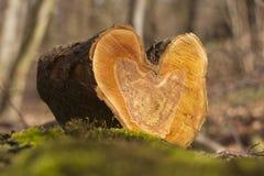 Bois d'amour Photographie stock libre de droits