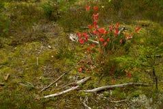 Bois d'automne. Image libre de droits