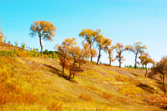 Bois d'automne Images stock