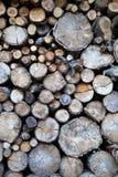 Bois d'automne Photographie stock libre de droits