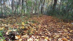 Bois d'automne Photo stock