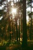 Bois d'automne la nuit Image libre de droits