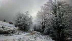 Bois d'hiver Photographie stock libre de droits