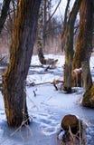 Bois d'hiver Photographie stock