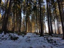 Bois d'hiver Images libres de droits