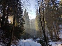 Bois d'hiver Images stock