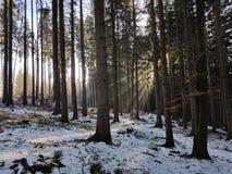 Bois d'hiver Photos libres de droits