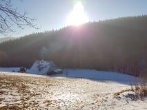 Bois d'hiver Image libre de droits