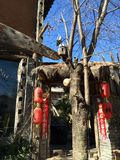 Bois d'hiver de Yunnan Photos libres de droits