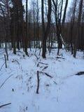 Bois d'hivers de début de la matinée Image libre de droits