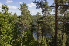 Bois d'Ideless Image stock