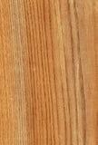 Bois d'orme américain illustration de vecteur