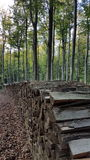 Bois dans la forêt Image libre de droits