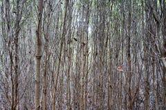 Bois dans la forêt de palétuvier Photos stock