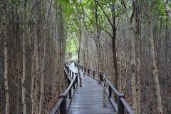 Bois dans la forêt de palétuvier Photo libre de droits