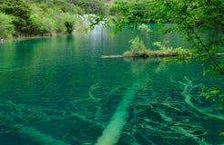 Bois dans le lac magique mirror photographie stock libre de droits