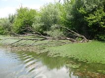 Bois dans le marais Photos libres de droits