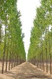 Bois dans le sauvage au printemps Image libre de droits