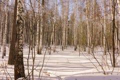 Bois de bouleau d'hiver photographie stock