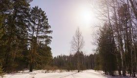 Bois de bouleau d'hiver Images libres de droits