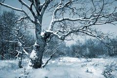 Bois de chêne photos libres de droits