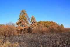 Bois de chêne Photographie stock