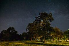 Bois de chêne verts d'arbres en parc sous le ciel étoilé de nuit avec la galaxie de manière laiteuse images stock