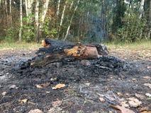 Bois de chauffage, charbons et cendre après le feu dans le feu incalculable de forêt photographie stock
