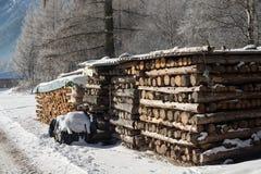Bois de chauffage d'hiver sous la neige Images stock