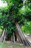 Bois de chauffage dans le jardin de fruit Image libre de droits